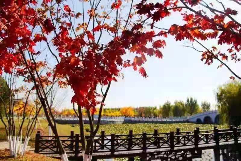校园景观系列